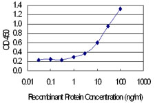 Detection limit for recombinant GST tagged CALB1 is 0.3 ng/ml as a capture antibody.