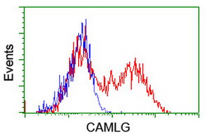 HEK293T cells transfected with either overexpress plasmid (Red) or empty vector control plasmid (Blue) were immunostained by anti-CAMLG antibody, and then analyzed by flow cytometry.