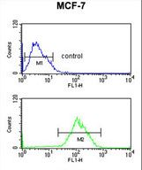 CBX1 Antibody flow cytometry of MCF-7 cells (bottom histogram) compared to a negative control cell (top histogram). FITC-conjugated goat-anti-rabbit secondary antibodies were used for the analysis.