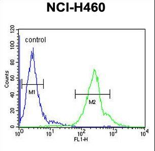CCDC69 Antibody flow cytometry of NCI-H460 cells (right histogram) compared to a negative control cell (left histogram). FITC-conjugated goat-anti-rabbit secondary antibodies were used for the analysis.