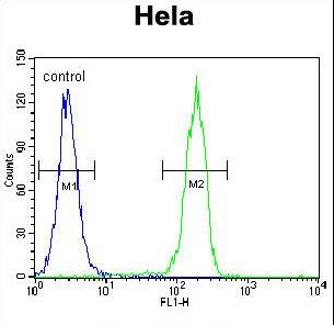 CCNG1 Antibody flow cytometry of HeLa cells (right histogram) compared to a negative control cell (left histogram). FITC-conjugated goat-anti-rabbit secondary antibodies were used for the analysis.