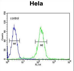 CCNH Antibody flow cytometry of HeLa cells (right histogram) compared to a negative control cell (left histogram). FITC-conjugated goat-anti-rabbit secondary antibodies were used for the analysis.