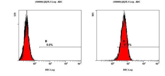 CCR2 Antibody - FACS analysis of CCR2 in NIH/3T3 cells.  This image was taken for the unconjugated form of this product. Other forms have not been tested.