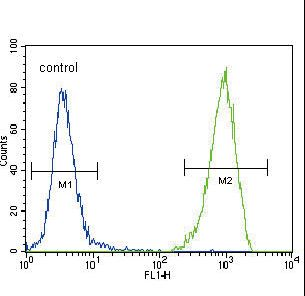 CD135 / FLT3 Antibody - FLT3 (CD135) Antibody flow cytometry of 293 cells (right histogram) compared to a negative control cell (left histogram). FITC-conjugated goat-anti-rabbit secondary antibodies were used for the analysis.