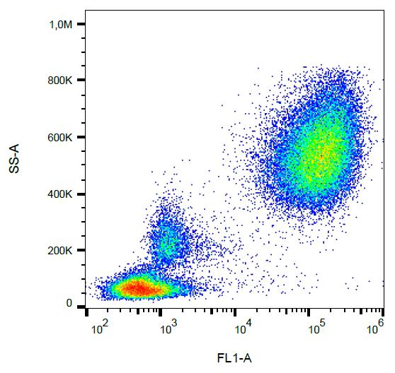 CD65 Antibody - Surface staining of CD65 in human peripheral blood with anti-CD65 (VIM8) FITC.