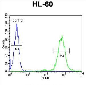 CD69 Antibody flow cytometry of HL-60 cells (right histogram) compared to a negative control cell (left histogram). FITC-conjugated goat-anti-rabbit secondary antibodies were used for the analysis.