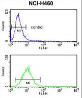CDC42 Antibody flow cytometry of NCI-H460 cells (bottom histogram) compared to a negative control cell (top histogram). FITC-conjugated goat-anti-rabbit secondary antibodies were used for the analysis.