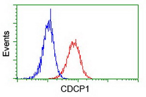 CDCP1 Antibody - Flow cytometry of Jurkat cells, using anti-CDCP1 antibody (Red), compared to a nonspecific negative control antibody (Blue).