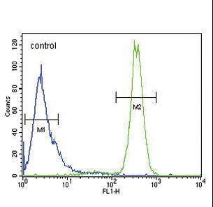 p19 Antibody flow cytometry of HeLa cells (right histogram) compared to a negative control cell (left histogram). FITC-conjugated goat-anti-rabbit secondary antibodies were used for the analysis.