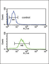 CFL1 Antibody flow cytometry of HL-60 cells (bottom histogram) compared to a negative control cell (top histogram). FITC-conjugated goat-anti-rabbit secondary antibodies were used for the analysis.