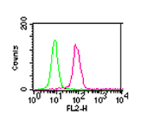 CHUK / IKKA / IKK Alpha Antibody - Intracellular staining of HEK293 cells using 0.5 ug of IKK alpha. Green histogram represents the isotype control antibody ( This image was taken for the unmodified form of this product. Other forms have not been tested.