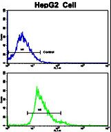 Flow cytometric of HepG2 cells using Creatine Kinase MB (CKM) Antibody (bottom histogram) compared to a negative control cell (top histogram). FITC-conjugated goat-anti-rabbit secondary antibodies were used for the analysis.
