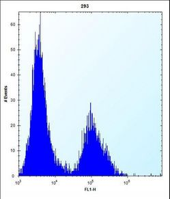 CLDN2 Antibody (C-term Y195) flow cytometry of 293 cells (right histogram) compared to a negative control cell (left histogram). FITC-conjugated goat-anti-rabbit secondary antibodies were used for the analysis.