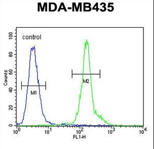 CLEC10A / CD301 Antibody - CLEC10A Antibody flow cytometry of MDA-MB435 cells (right histogram) compared to a negative control cell (left histogram). FITC-conjugated goat-anti-rabbit secondary antibodies were used for the analysis.