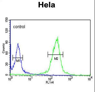 CLIP1 / CLIP-170 Antibody - CLIP1 Antibody flow cytometry of HeLa cells (right histogram) compared to a negative control cell (left histogram). FITC-conjugated goat-anti-rabbit secondary antibodies were used for the analysis.