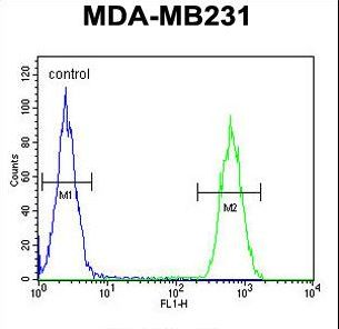 CLTA / LCA Antibody - CLTA Antibody flow cytometry of MDA-MB231 cells (right histogram) compared to a negative control cell (left histogram). FITC-conjugated goat-anti-rabbit secondary antibodies were used for the analysis.