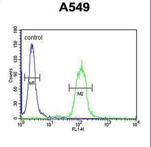 CLU / Clusterin Antibody - CLU Antibody flow cytometry of A549 cells (right histogram) compared to a negative control cell (left histogram). FITC-conjugated goat-anti-rabbit secondary antibodies were used for the analysis.