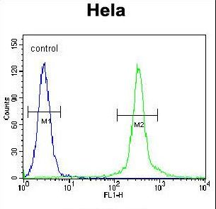 CMPK2 Antibody - CMPK2 Antibody flow cytometry of HeLa cells (right histogram) compared to a negative control cell (left histogram). FITC-conjugated goat-anti-rabbit secondary antibodies were used for the analysis.