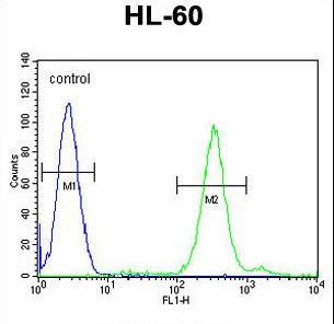 CNIH2 Antibody - CNIH2 Antibody flow cytometry of HL-60 cells (right histogram) compared to a negative control cell (left histogram). FITC-conjugated goat-anti-rabbit secondary antibodies were used for the analysis.