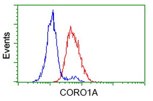 CORO1A / Coronin 1a Antibody - Flow cytometry of HeLa cells, using anti-CORO1A antibody (Red), compared to a nonspecific negative control antibody (Blue).