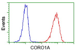 CORO1A / Coronin 1a Antibody - Flow cytometry of Jurkat cells, using anti-CORO1A antibody (Red), compared to a nonspecific negative control antibody (Blue).