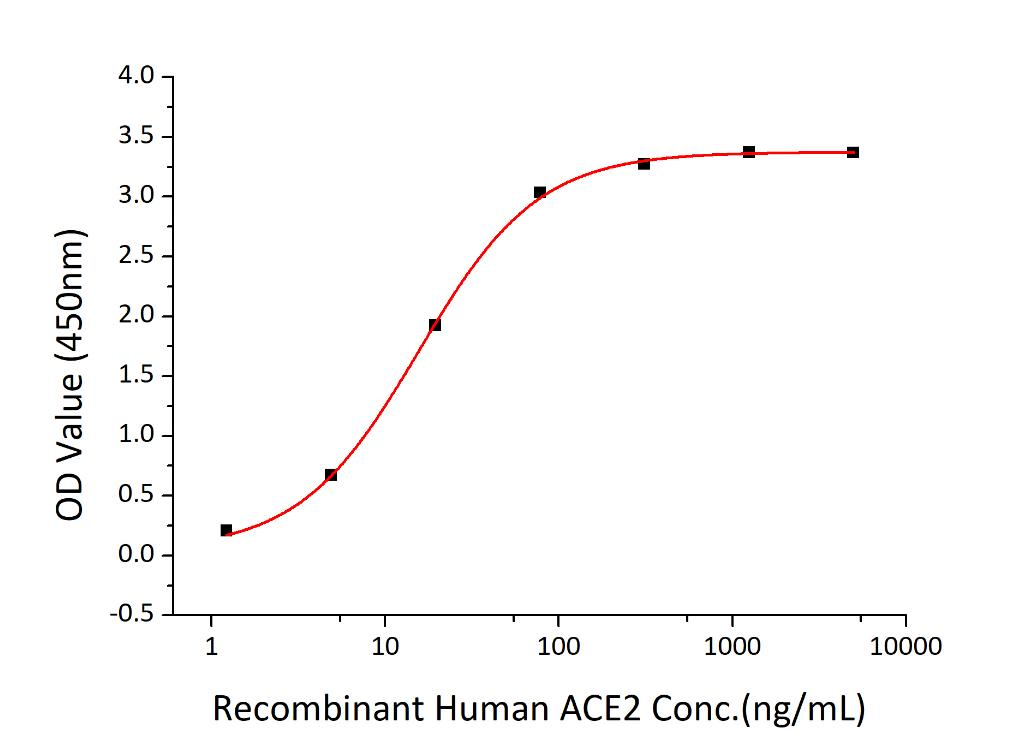 SARS-CoV-2 S1 Protein - Immobilized Recombinant 2019-nCoV Spike S1-His at 2µg/mL (100 µL/well) can bind Recombinant Human ACE2 with a linear range of 1.5-15 ng/mL.
