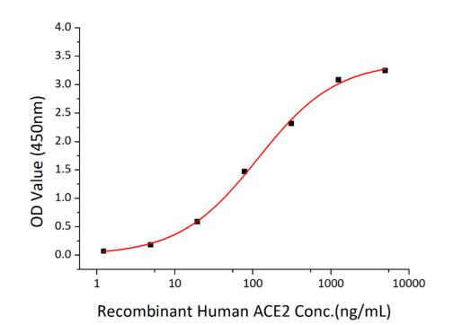 SARS-CoV-2 Spike Glycoprotein Protein - Immobilized Recombinant 2019-nCoV Spike S1+S2 ECD-His at 2µg/mL (100 µL/well) can bind Recombinant Human ACE2 with a linear range of 1.5-115.4 ng/mL.