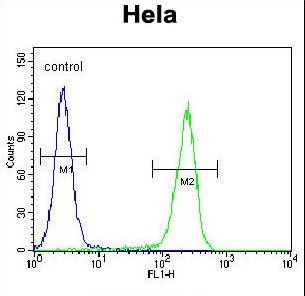 CRFR2D Antibody flow cytometry of HeLa cells (right histogram) compared to a negative control cell (left histogram). FITC-conjugated goat-anti-rabbit secondary antibodies were used for the analysis.