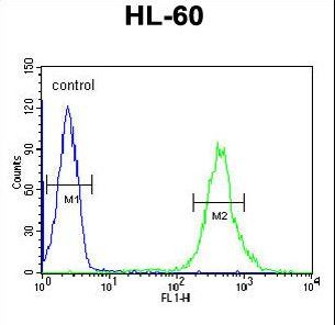 CRIP1 Antibody flow cytometry of HL-60 cells (right histogram) compared to a negative control cell (left histogram). FITC-conjugated goat-anti-rabbit secondary antibodies were used for the analysis.
