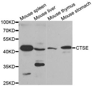 Western blot analysis of extracts of various tissues.