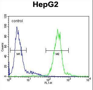 CTSH Antibody flow cytometry of HepG2 cells (right histogram) compared to a negative control cell (left histogram). FITC-conjugated goat-anti-rabbit secondary antibodies were used for the analysis.