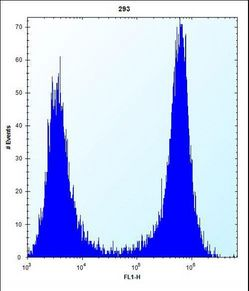 CTSK Antibody (Center E112) flow cytometry of 293 cells (right histogram) compared to a negative control cell (left histogram). FITC-conjugated goat-anti-rabbit secondary antibodies were used for the analysis.