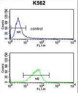 CXXC4 Antibody - CXXC4 Antibody flow cytometry of K562 cells (bottom histogram) compared to a negative control cell (top histogram). FITC-conjugated goat-anti-rabbit secondary antibodies were used for the analysis.