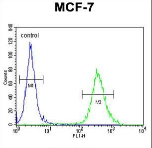 CYB561D1 Antibody - CYB561D1 Antibody flow cytometry of MCF-7 cells (right histogram) compared to a negative control cell (left histogram). FITC-conjugated goat-anti-rabbit secondary antibodies were used for the analysis.