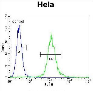 CYC1 / Cytochrome C-1 Antibody - CYC1 Antibody flow cytometry of HeLa cells (right histogram) compared to a negative control cell (left histogram). FITC-conjugated goat-anti-rabbit secondary antibodies were used for the analysis.