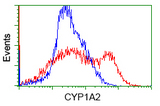 HEK293T cells transfected with either overexpress plasmid (Red) or empty vector control plasmid (Blue) were immunostained by anti-CYP1A2 antibody, and then analyzed by flow cytometry.