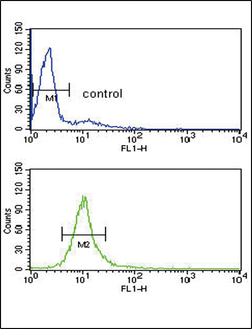 CYP51A1 / CYP51 Antibody - CYP51A1 Antibody flow cytometry of HL-60 cells (bottom histogram) compared to a negative control cell (top histogram). FITC-conjugated goat-anti-rabbit secondary antibodies were used for the analysis.