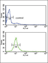CYP51A1 Antibody flow cytometry of HL-60 cells (bottom histogram) compared to a negative control cell (top histogram). FITC-conjugated goat-anti-rabbit secondary antibodies were used for the analysis.