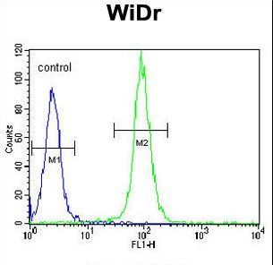 DAAM1 Antibody - DAAM1-T361 Antibody flow cytometry of WiDr cells (right histogram) compared to a negative control cell (left histogram). FITC-conjugated goat-anti-rabbit secondary antibodies were used for the analysis.