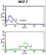 DAGLB Antibody - DAGLB Antibody flow cytometry of MCF-7 cells (bottom histogram) compared to a negative control cell (top histogram). FITC-conjugated goat-anti-rabbit secondary antibodies were used for the analysis.