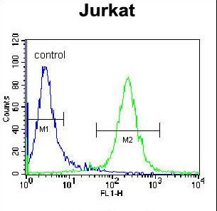 DARS Antibody - DARS Antibody flow cytometry of Jurkat cells (right histogram) compared to a negative control cell (left histogram). FITC-conjugated donkey-anti-rabbit secondary antibodies were used for the analysis.