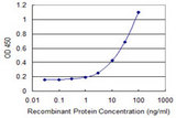 Detection limit for recombinant GST tagged DCK is 0.3 ng/ml as a capture antibody.