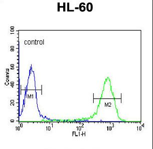 DCP2 Antibody - DCP2 Antibody flow cytometry of HL-60 cells (right histogram) compared to a negative control cell (left histogram). FITC-conjugated goat-anti-rabbit secondary antibodies were used for the analysis.