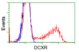 HEK293T cells transfected with either pCMV6-ENTRY DCXR (Red) or empty vector control plasmid (Blue) were immunostained with anti-DCXR mouse monoclonal, and then analyzed by flow cytometry.
