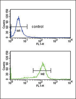 DDX39B / UAP56 Antibody - BAT1 Antibody flow cytometry of K562 cells (bottom histogram) compared to a negative control cell (top histogram). FITC-conjugated goat-anti-rabbit secondary antibodies were used for the analysis.