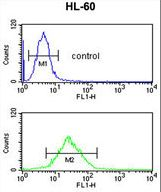LY75 Antibody flow cytometry of HL-60 cells (bottom histogram) compared to a negative control cell (top histogram). FITC-conjugated goat-anti-rabbit secondary antibodies were used for the analysis.
