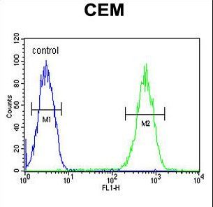 Delta-6 Desaturase / FADS2 Antibody - FADS2 Antibody flow cytometry of CEM cells (right histogram) compared to a negative control cell (left histogram). FITC-conjugated goat-anti-rabbit secondary antibodies were used for the analysis.