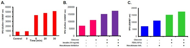 A) Glucose Uptake time course, Jurkat Cells: Cells were starved (Glucose-free, FBS-free media), inhibitor incubation time: 2 hours. B) 3T3-L1 cells were Glucose and FBS Deprived for 24 hours, switched to media with Glucose, stimulated without or with Insulin (10 ng/ml) for 15 min and with or without 1X Inhibitor. C) HeLa cells were Glucose and FBS deprived for 2 hours, then switched to Glucose and FBS-free media (Control), or complete media (10% FBS) with or without 1X Inhibitor for 30 min.