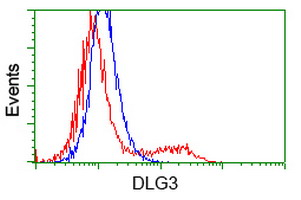 DLG3 / SAP102 Antibody - HEK293T cells transfected with either overexpress plasmid (Red) or empty vector control plasmid (Blue) were immunostained by anti-DLG3 antibody, and then analyzed by flow cytometry.