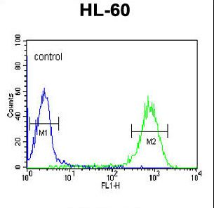 DLK2 Antibody - DLK2 Antibody flow cytometry of HL-60 cells (right histogram) compared to a negative control cell (left histogram). FITC-conjugated goat-anti-rabbit secondary antibodies were used for the analysis.